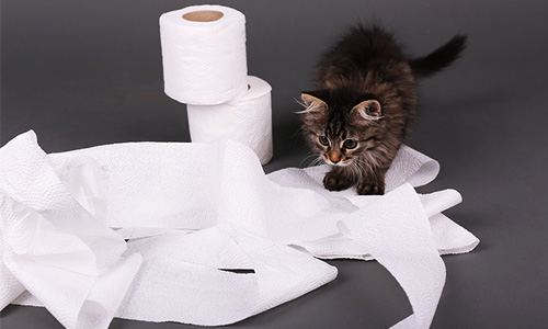 problems-with-making-toilet-paper
